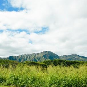 Kauai Wedding Photographer - Kauai Trip http://brittneyhannonphotography.com