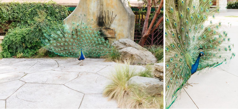 LA Arboretum - Garden Engagement Session